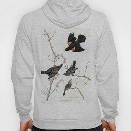 Red-winged Starling Or Marsh Blackbird - John James Audubon Hoody