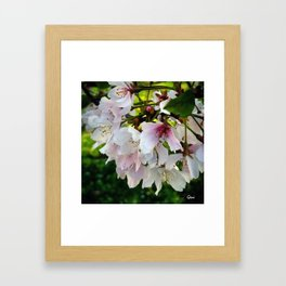 Cheery Cherry Blossoms Framed Art Print