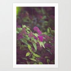 purple flower. Art Print
