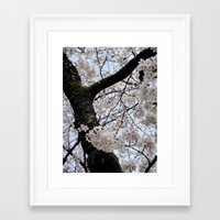 cyarin Framed Art Prints featuring Sakura Blooming (Japan) by Julie Maxwell
