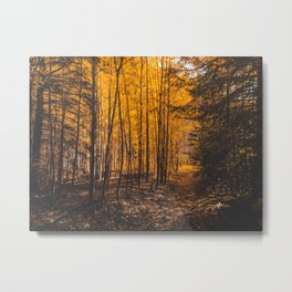 Autumn, yellow forest Metal Print
