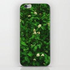 Greenery II iPhone & iPod Skin