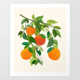 Oranges and Blossoms II / Tropical Fruit Illustration Art Print