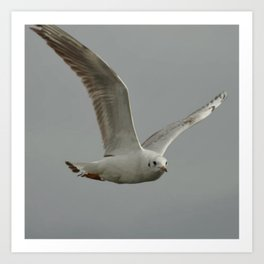 Seagull In Flight Against Gray Sky Vector Art Print