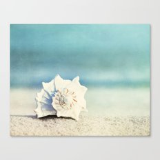 Seashell on Beach Photography,
