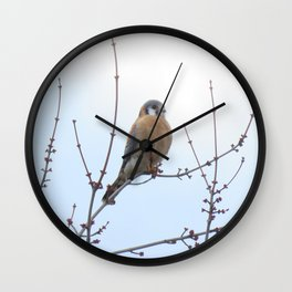 Sparrowhawk (Kestrel) 2 Wall Clock