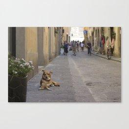Cane, Distretto di Oltrarno, Firenze Canvas Print
