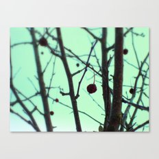 winter's toll Canvas Print