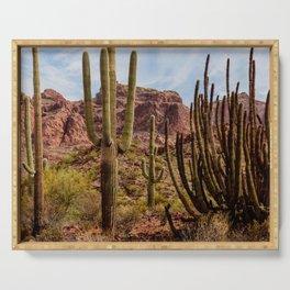 Cacti Variety Serving Tray