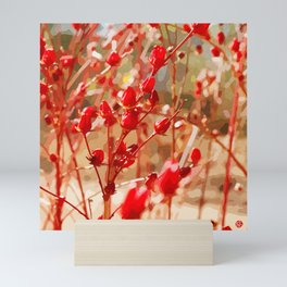 Red Wildflowers of the Outback Mini Art Print