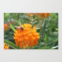 Orange on Orange  Canvas Print