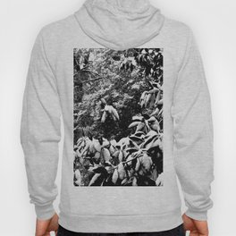 Snow-Covered Magnolia Hoody