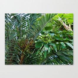 Jardins des Plantes Canvas Print
