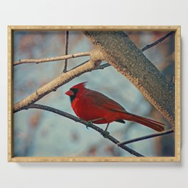 Pretty Male Cardinal Serving Tray