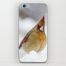 Female Cardinal in The Snow iPhone Skin