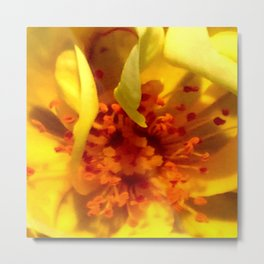 Pollen Macro Photography By Saribelle Rodriguez Metal Print