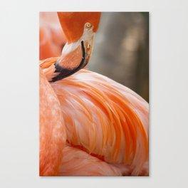 Miami Flamingo Feathers Canvas Print