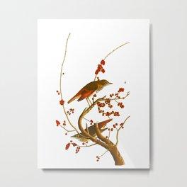 Hermit Thrush Bird Metal Print