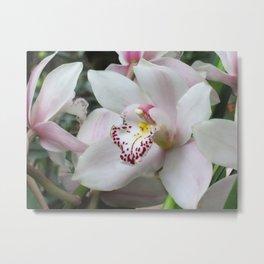 Cymbidium Orchid Close-up Metal Print