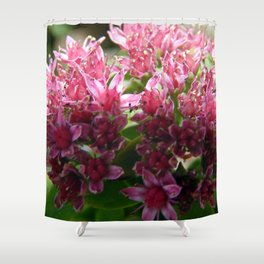 Sedum Flowers and the Ant Shower Curtain