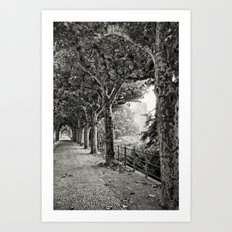 Sycamore 496 Art Print