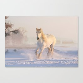 White horse in snow Canvas Print