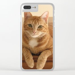 Canelle the red tabby Clear iPhone Case
