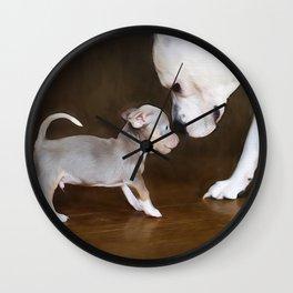The Chihuahua vs The Pity Wall Clock