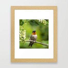 Hummingbird XVI Framed Art Print