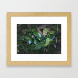 Tangled Web Framed Art Print