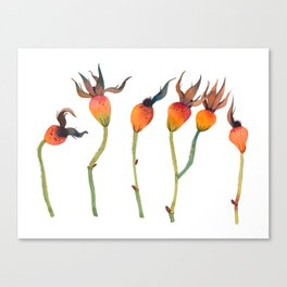 Rose Hips Canvas Print