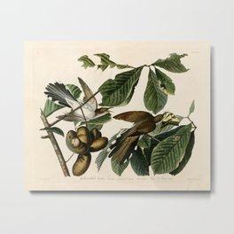 Yellow-billed Cuckoo, Birds of America by John James Audubon Metal Print