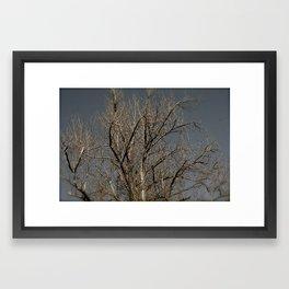 Rickety  Framed Art Print