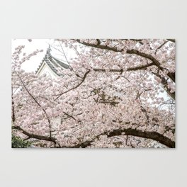 Cherry Blossoms in Osaka Japan Canvas Print
