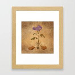 Anatomy of a Potato Plant Framed Art Print