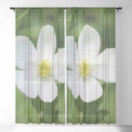 Wind Flower Sheer Curtain