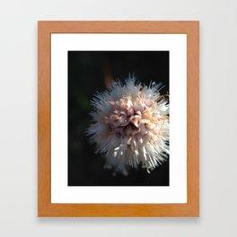 Flower 7 Framed Art Print