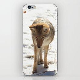 Coyote iPhone Skin