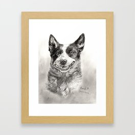 Australian Cattle Dog Drawn With Graphite Framed Art Print