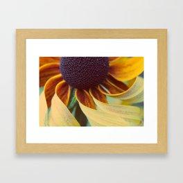 Black eyed susan 03 Framed Art Print