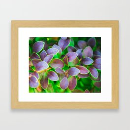 Vibrant green and purple leaves Framed Art Print