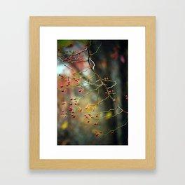 Dusk Bloom Framed Art Print
