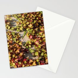 Parthenocissus Tricuspidata Stationery Cards