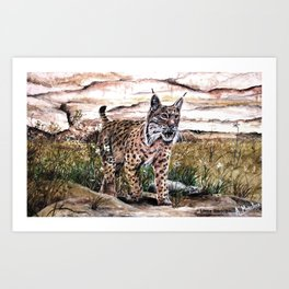 Lince ibérico Art Print