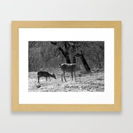 The doe and young buck... Framed Art Print