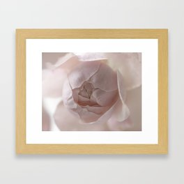 soft pink rose Framed Art Print