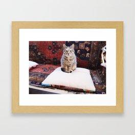 Cats of Istanbul I Framed Art Print