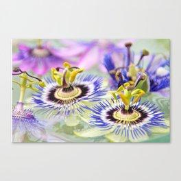 Passionflower Canvas Print