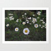 Field of Daisies Art Print