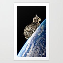 Cat's rest  Art Print